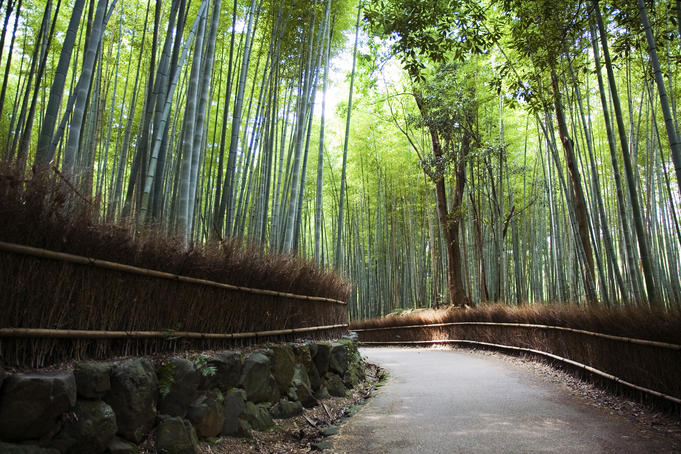 Arashiyama Kyoto through the lens